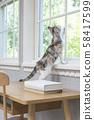 小貓從窗口望出去 58417599