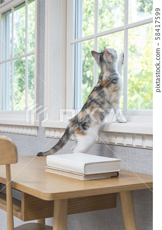 Kitten looking up out of the window 58417599