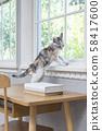 窗邊的小貓 58417600