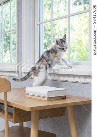 Kitten of the window side 58417600