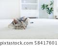 小貓在地毯上睡覺 58417601