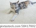 小貓在地毯上打lumber 58417602