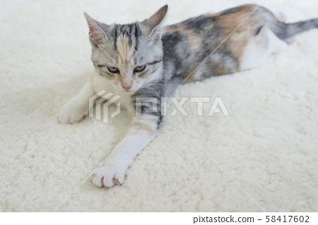 Kitten slumbering in the carpet 58417602