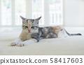 小貓在地毯上打lumber 58417603