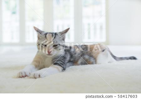 Kitten slumbering in the carpet 58417603