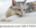 小貓在地毯上打lumber 58417604