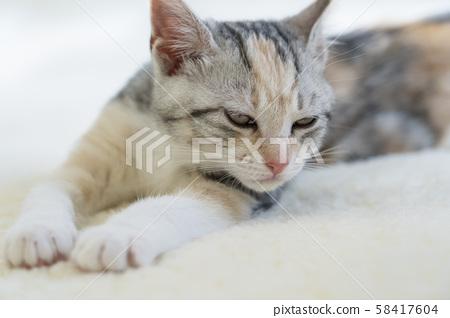 Kitten slumbering in the carpet 58417604