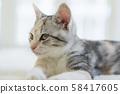 一隻盯著小貓 58417605