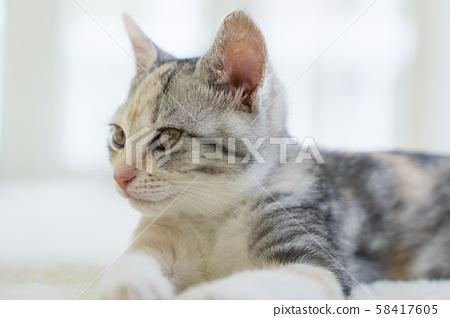 A staring kitten 58417605