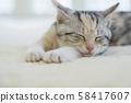 小貓在地毯上睡覺 58417607