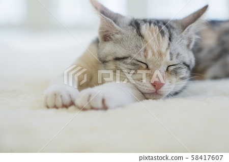 Kitten sleeping in the carpet 58417607