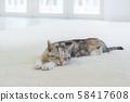 小貓在地毯上睡覺 58417608
