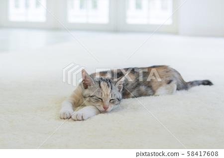 Kitten sleeping in the carpet 58417608