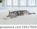 小貓在地毯上睡覺 58417609