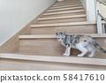 小貓在樓梯上回望 58417610