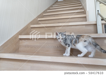 Kitten looking back on stairs 58417610
