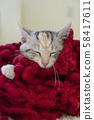 小貓睡在一條紅色的羊毛圍巾 58417611