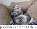 查尋的小貓 58417612