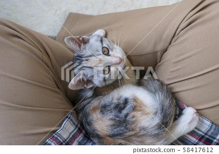 A kitten looking up 58417612
