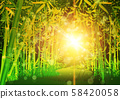 Bamboo forest background 58420058