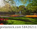 Keukenhof flower garden. Lisse, the Netherlands. 58426211