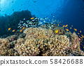 Maldives corals house for Fishes 58426688