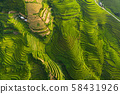 Aerial top view of paddy rice terraces, green 58431926