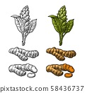 Turmeric root, powder and flower. Vector color vintage engraved 58436737