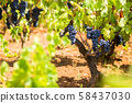 Branch of the Primitivo di Manduria grape, organic 58437030