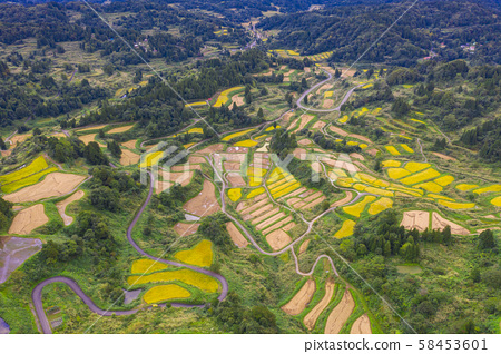 Aerial view of golden terrace rice field in 58453601