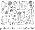 Sketch of different vegetables isolated on white background.  58459062