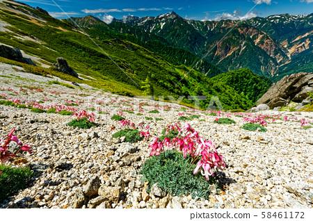 燕岳의 코마 쿠사 군락과 야리 전망 58461172