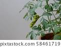호랑 나비 終齢 1 일 점심 무렵 (루) 58461719