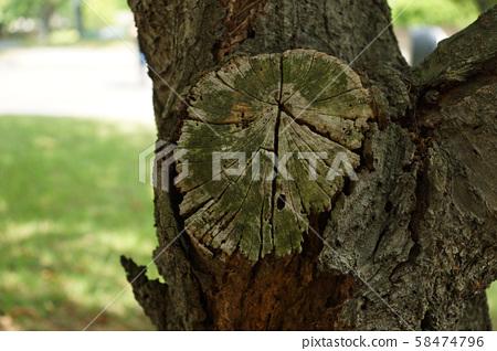 Tree stump 58474796