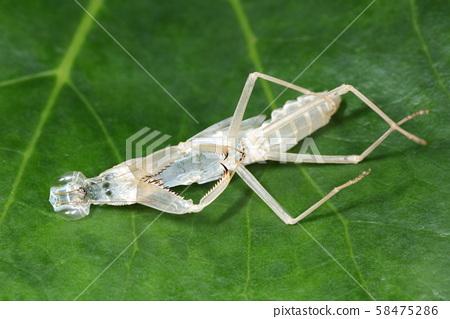 螳螂排外殼 58475286