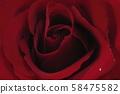 Rose 58475582