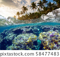 Underwater Scene With Reef And Tropical Fish 58477483