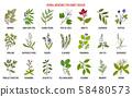 Best herbs for kidney disease 58480573
