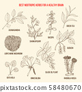 Best nootropic medicinal herbs for a healthy brain 58480670