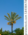 Green palm tree on blue sky backgroundgrunge palm background 58498478
