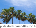Coconut palm trees perspective view 58498516
