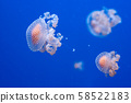 graceful sea animal white spotted jellyfish in blue water 58522183