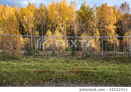 Volleyball net against the backdrop of a birch 58522421