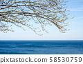 Lake Ontario 58530759