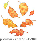 Fallen leaves and dead leaves 58545980