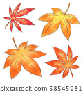 Maple 58545981