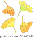 Leaves of ginkgo biloba 58545982