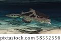 Prehistoric shark Edestus 58552356