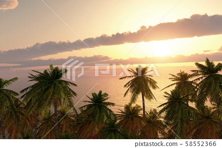 Palm trees by the sea 58552366