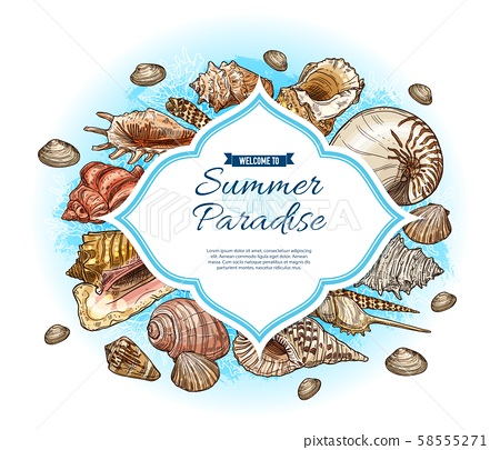 Seashells, sea shells and conches. Summer paradise 58555271